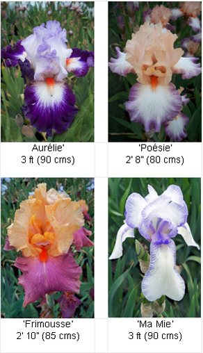 Viv Marsh Postal Plants - IRIS (IRIS COLLECTION)